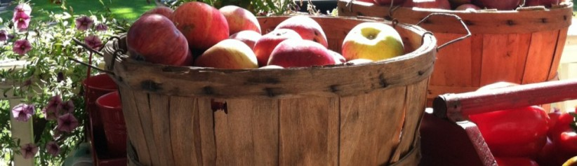 cropped-basket-of-apples.jpg